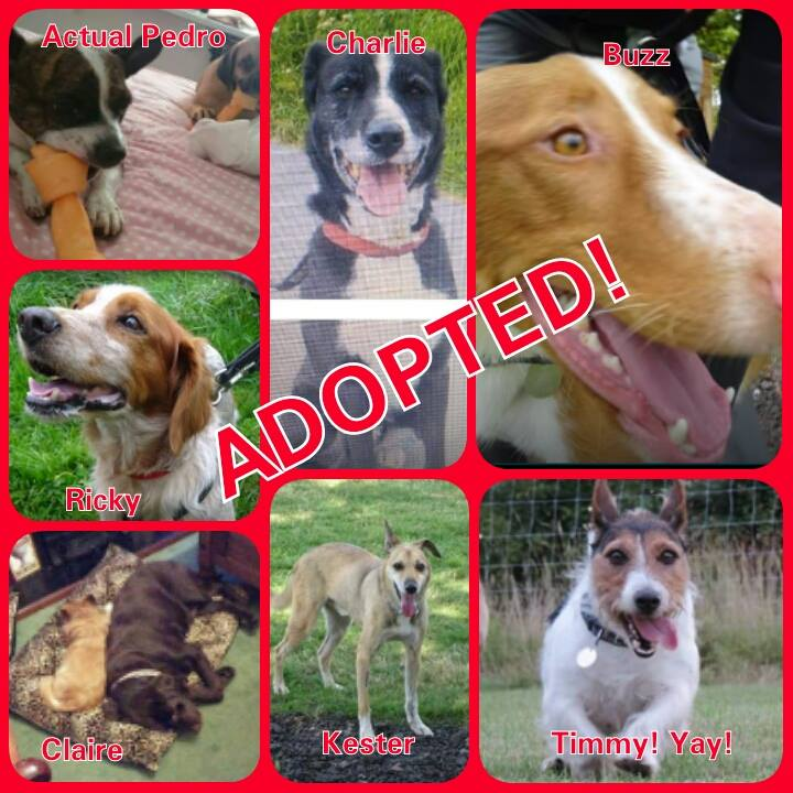 sndogs-adopted